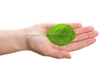Green leaf in hand isolated on white background   Stock Photo - 14181290