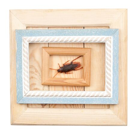 Old wooden frames and fake cockroach isolated on white  photo
