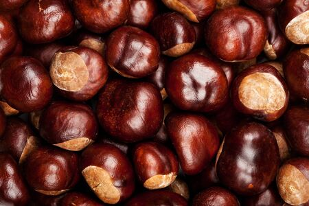 Closeup shot of conkers texture Stock Photo - 16169631