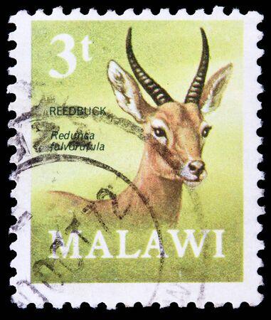 MALAWI - CIRCA 1971: a stamp printed in Malawi shows image of the reedbuck redunca fulvorfula, circa 1971 Stock Photo