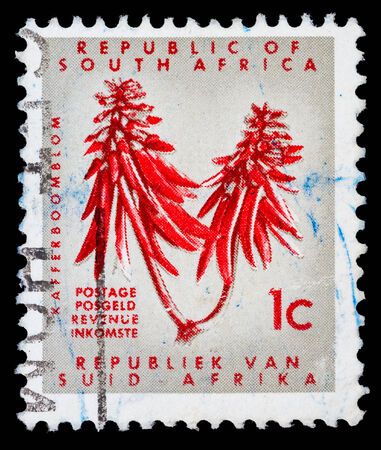 suid: REPUBLIC OF SOUTH AFRICA - CIRCA 1965: A stamp printed in Republic of South Africa shows Kafferboom flower, circa 1965   Editorial