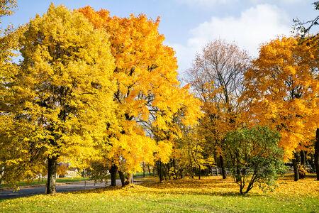 Beautiful autumn trees on a sunny day photo