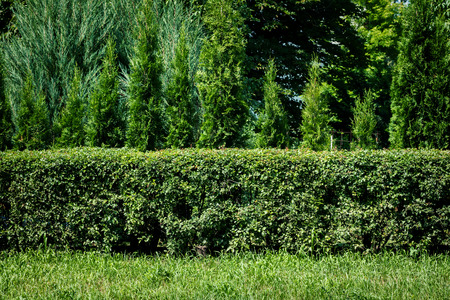 Green grass, green hedge and green trees background Foto de archivo