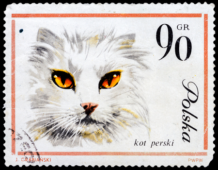 POLAND - CIRCA 1964: Postage stamp printed in Poland shows picture of a Red Orange Persian Cat, circa 1964  photo