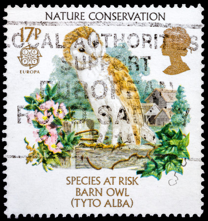 UNITED KINGDOM - CIRCA 1986: A stamp printed in United Kingdom shows a Barn Owl (Tyto Alba), series Nature Conservation, circa 1986  photo