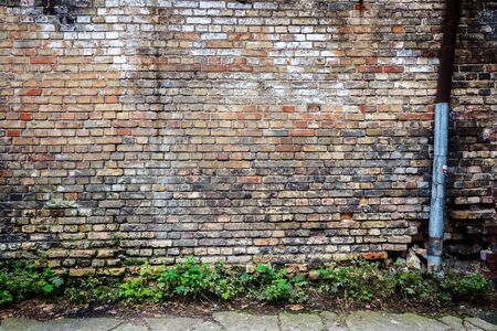 Old yellow brick wall background and green grass photo