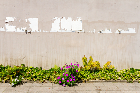 teared: Aged weathered street with teared off posters, flowers and ferns Stock Photo