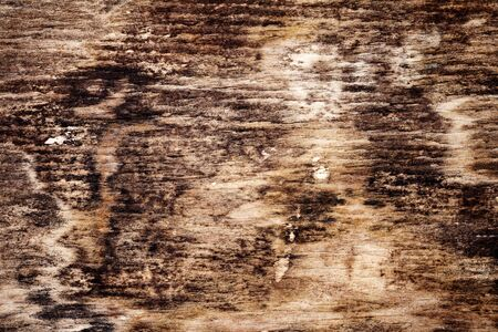 Old rotten moldy wood texture background