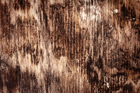 moldy: Old rotten moldy wood texture background