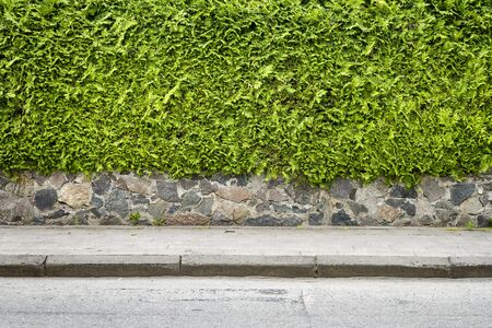 Green arbour hedge with stone basement and sidewalk background