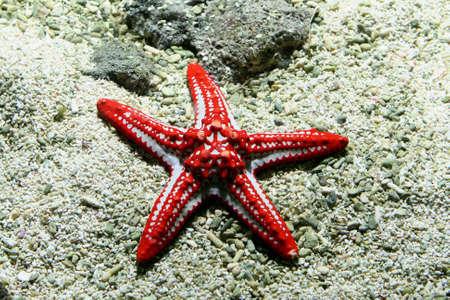 Image of a Starfish underwater in aquarium photo