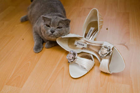 Cat playing with the bridal shoes Stock Photo - 5609204