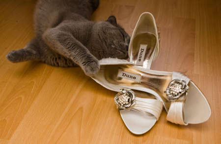 snoop: Cat playing with the bridal shoes