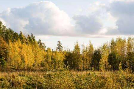 crop margin: color oro de ca�da de �rboles en Finlandia  Foto de archivo