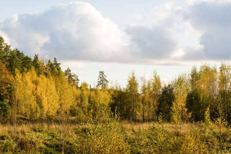 crop margin: gold color of fall trees in Finland