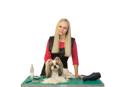canine: Woman groomer with beautiful shih-tzu - isolated on white Stock Photo