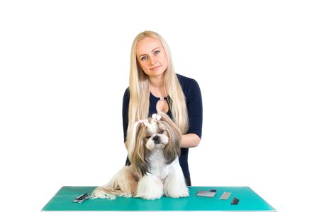 groomer: Woman groomer works with cute shih-tzu dog - isolated on white Stock Photo