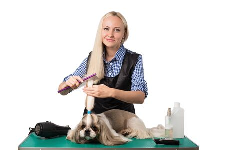 groomer: Beautiful smiling woman groomer combing little cute shih-tzu dog - isolated on white Stock Photo