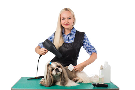 groomer: Beautiful smiling woman groomer combing cute shih-tzu dog - isolated on white Stock Photo