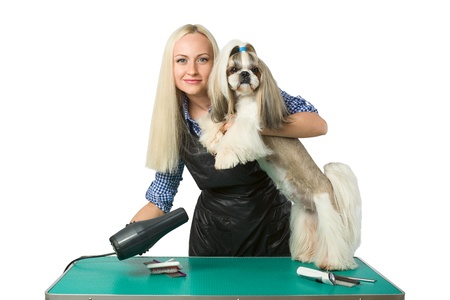 groomer: Beautiful smiling woman groomer with hair drier and cute shih-tzu dog - isolated on white Stock Photo