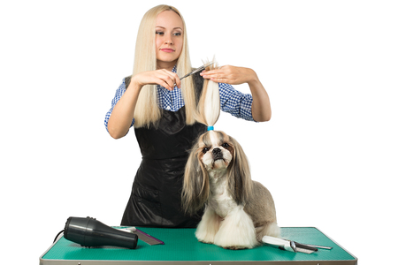 groomer: Beautiful smiling woman groomer with scissors and little cute shih-tzu dog - isolated on white