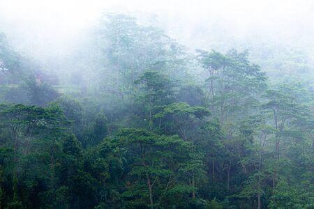 Morning fog on the rainy deep jungle forest - Tegallalang, Ubud, Bali