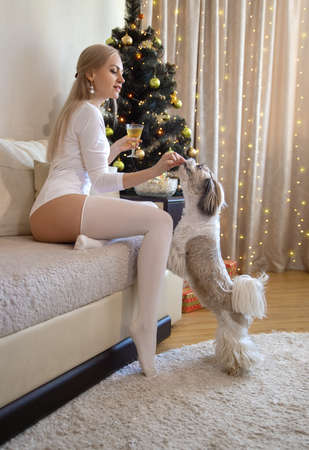 Beautiful blonde woman with perfect legs posing on the sofa in white stockings near New Year's fir-tree. Imagens