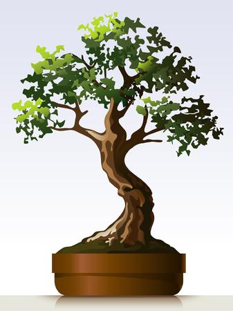 a bough: Bonsai Illustration