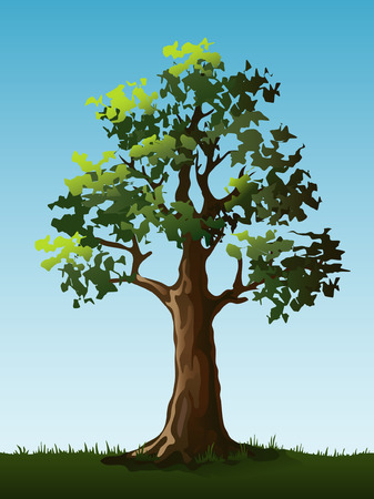 a bough: Large tree