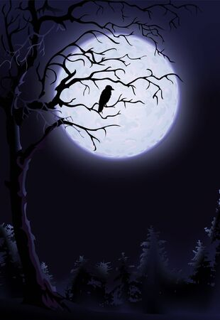 Night raven on a tree  Standard-Bild