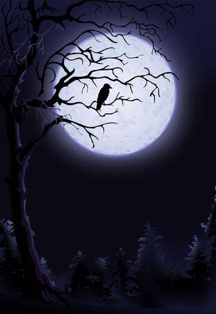 Night raven on a tree  photo