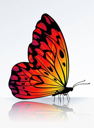 Beautiful fire-colored butterfly on reflecting surface