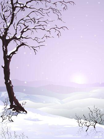 Snow-covered tree  photo