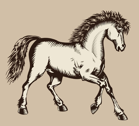 steed: Prancing horse woodcut