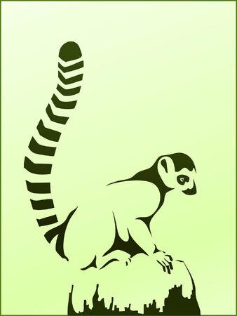 lemur: Ring-tailed lemur (or lemur catta) sitting on a rock