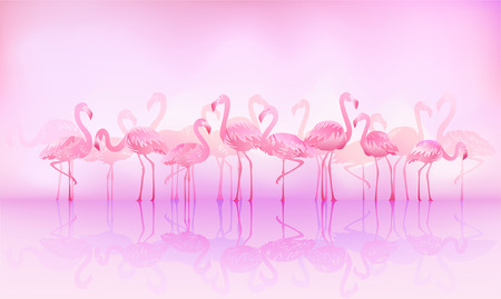 pink flamingo: Flock of caribbean flamingos over a lake