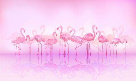 Flock of caribbean flamingos over the lake Foto de archivo