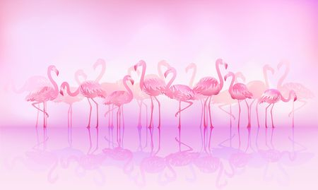 mirrored: Flock of caribbean flamingos over the lake Stock Photo