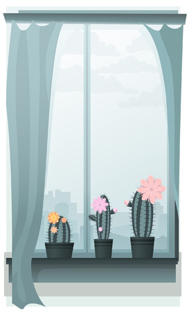 window curtains: Three blooming cacti on a window sill