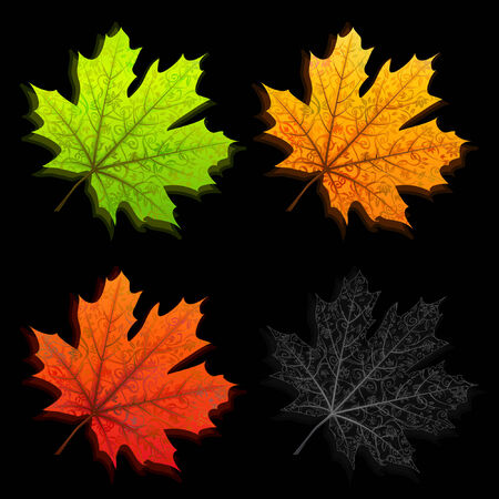 Autumn leaves in four different colors isolated on black Vector