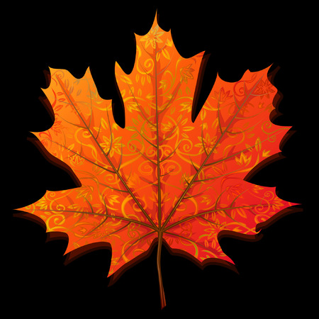 Autumn maple leaf isolated on black background
