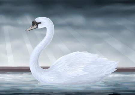 Vector graceful white mute swan