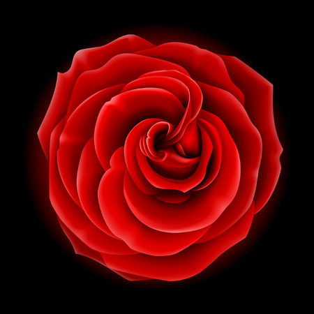 Beautiful vector red rose, symbol of love and passion
