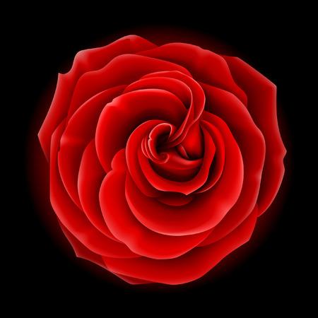 Rojo de vector hermosa rosa, símbolo del amor y la pasión
