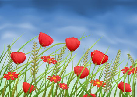 Red poppy-flowers and daisies on summer meadow Vector