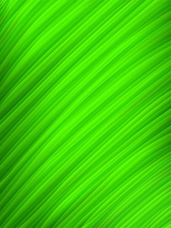 Vector image of a green leaf macro Vector