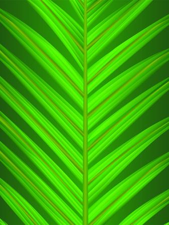fertile: a palm leaf closeup Illustration