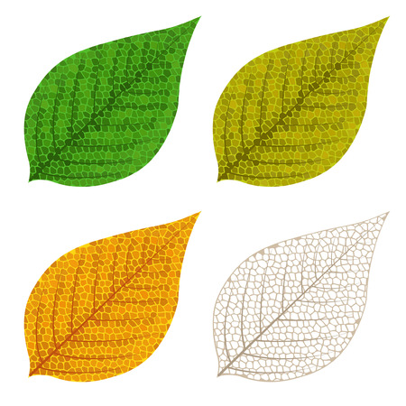Four autumn mosaic leaves isolated on white background Vector
