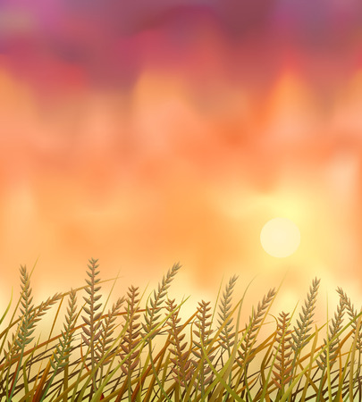 Wild crops field at sunset Stock Vector - 7295015