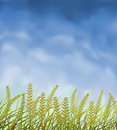 steppe: Wild crops field under blue sky Illustration